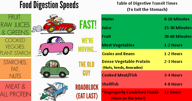 Food Digestion Speeds