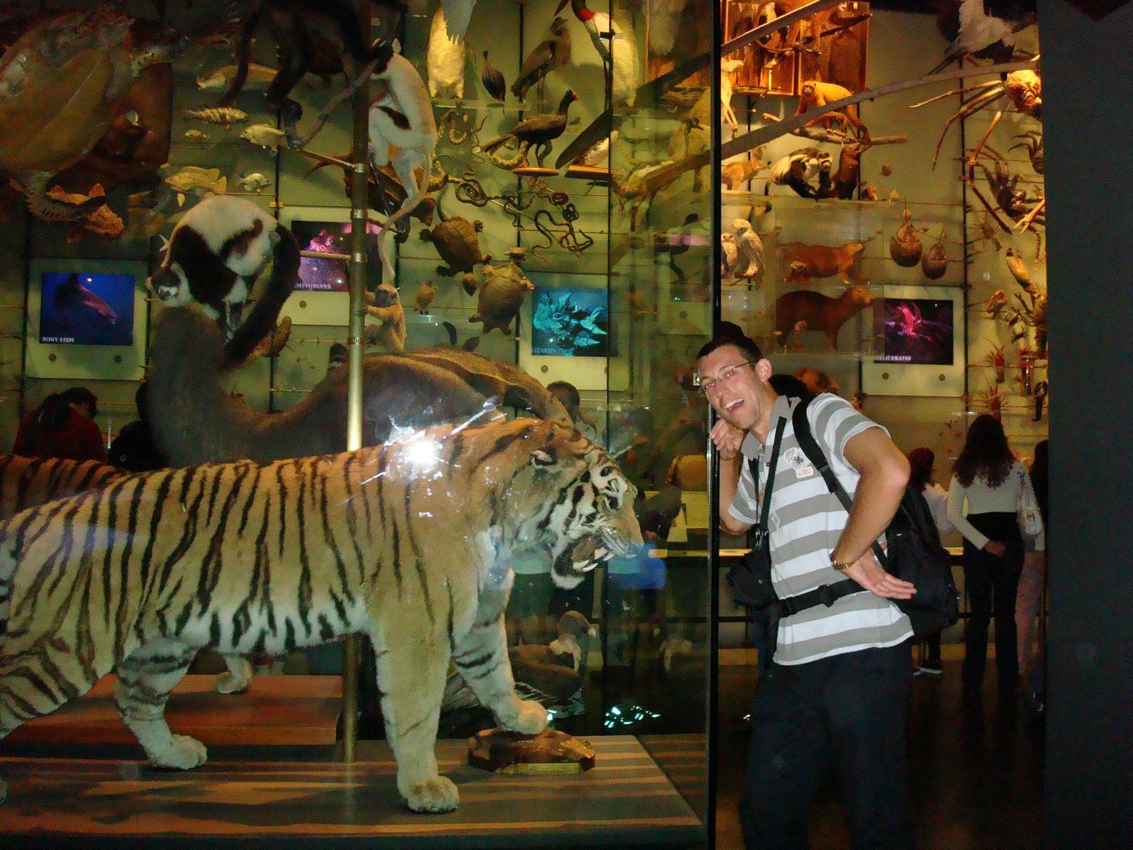 New York City, AMNH, Tiger vs Svet