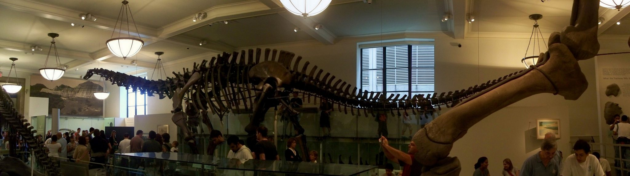 New York City, AMNH, Titanosaur, Skeleton