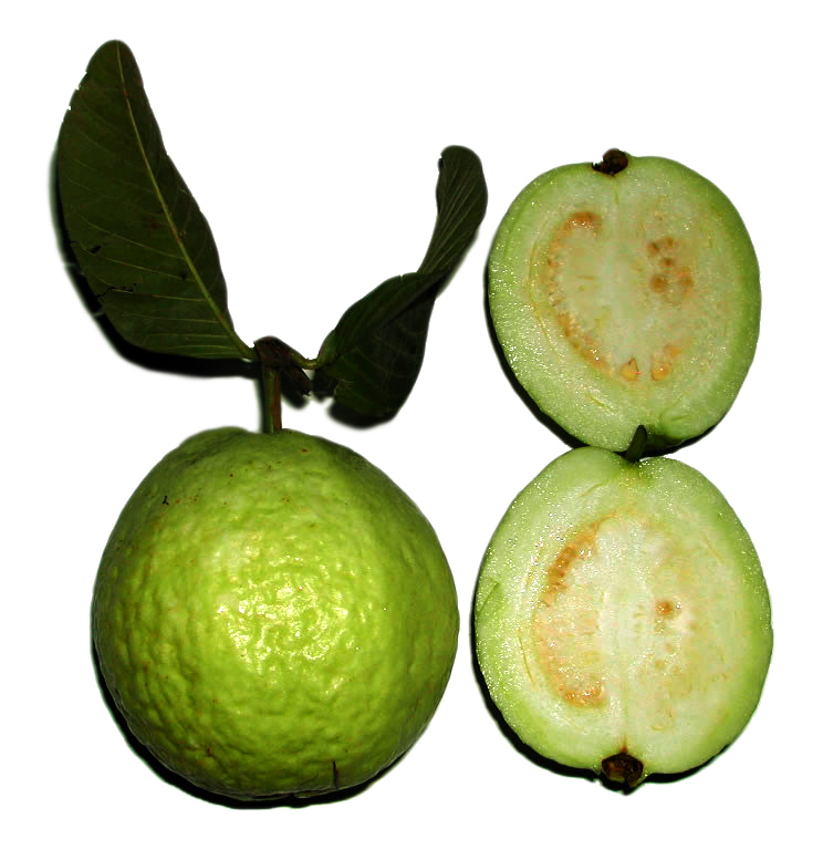 Guava the tropical superfruit svetoslav dimitrov guava fruit psidium guajava ccuart Image collections