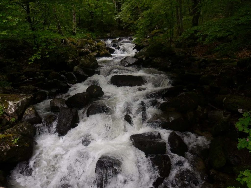 Zlatnite Mostove, Vitosha Mountains, Creek Image 4, Bulgaria