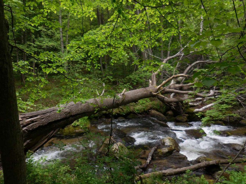 Zlatnite Mostove, Vitosha Mountains, Creek Image 5, Bulgaria