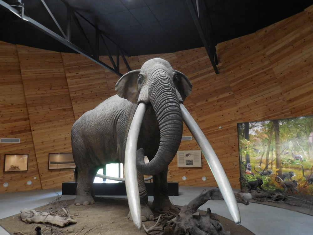 Velingrad, Spa Capital of the Balkans, Dorkovo Museum, View from Inside, Gomphothere