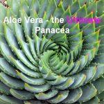 Aloe Vera Plant, the Ultimate Panacea, Featured Image, Image Credit Wikipedia