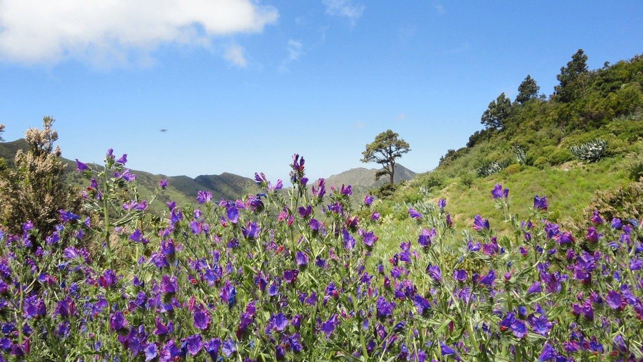 tenerife-island-eternal-spring-panorama