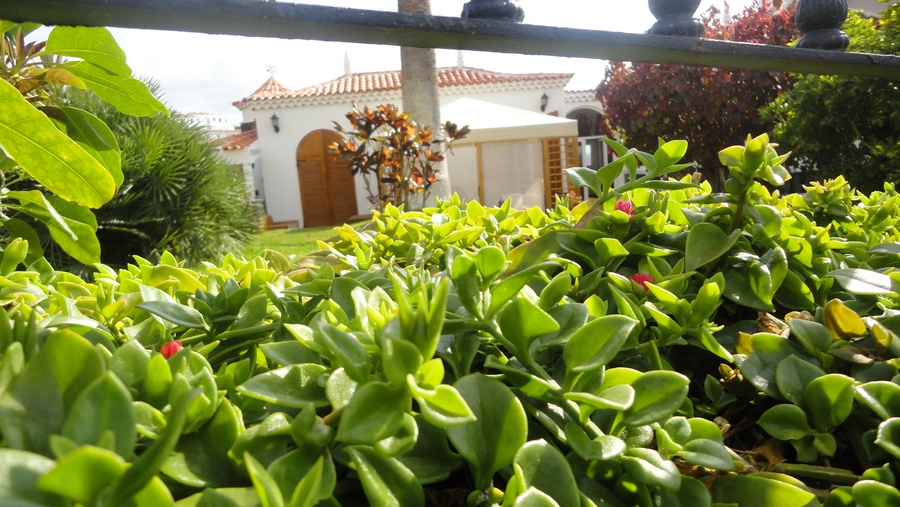 Tenerife, the Island of Eternal Spring, Verdant Plants