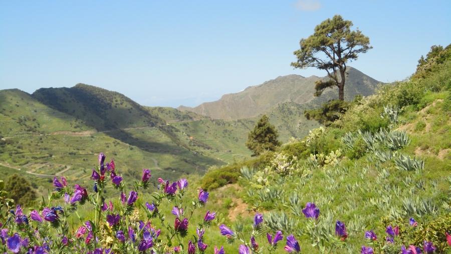 El Bolico, Verdant Vegetation