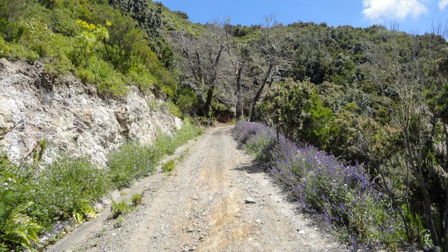 Tenerife, the Island of Eternal Spring, El Bolico, the Path to Infinity
