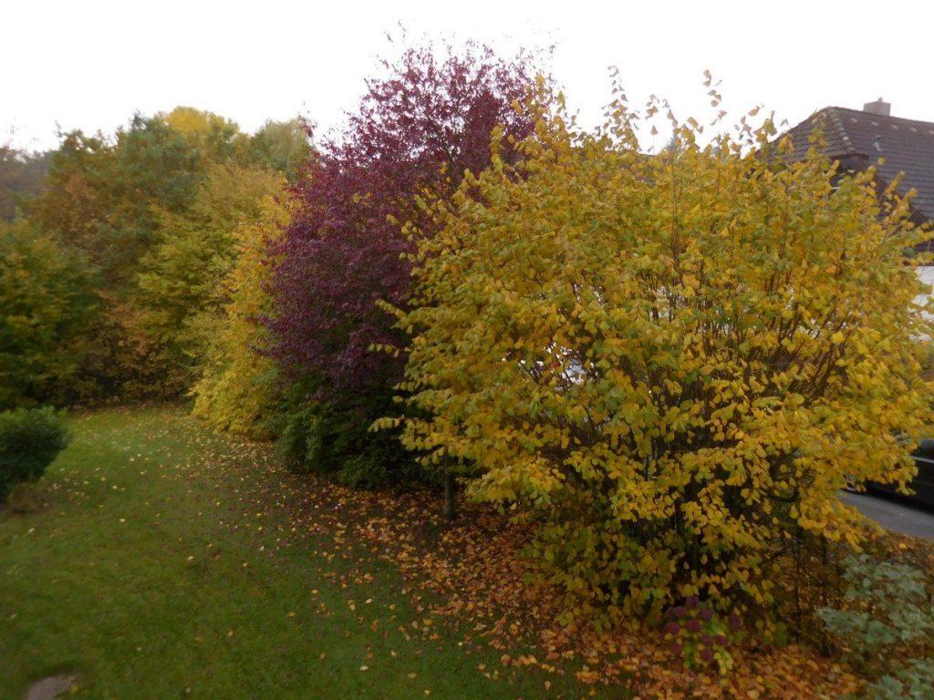 kassel-hesse-germany-golden-autumn-colours