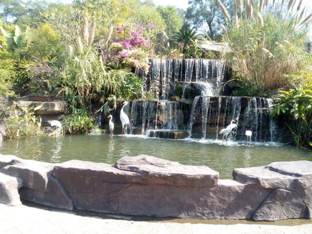 Lotus hill-china-waterfalls-lanes-flowers