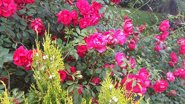 bulgarian rose fields, bulgaria, europe, the magic of traveling