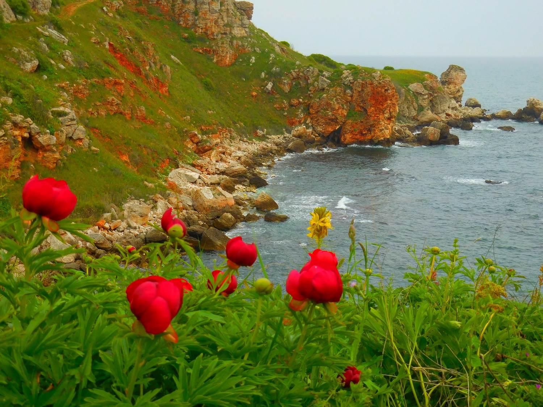 kavarna region, bulgaria, yailata, wild peonies